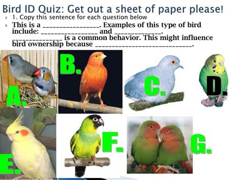 Essay On Different Types Of Birds In by Ppt Birds Types Powerpoint Presentation Id 6890929