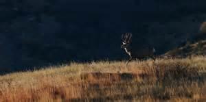 deer landscape image gallery deer landscape