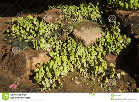cave plants cave plants stock photo image 45852365