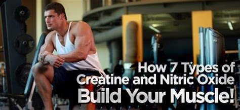 7 types of creatine how 7 types of creatine and nitric oxide build your
