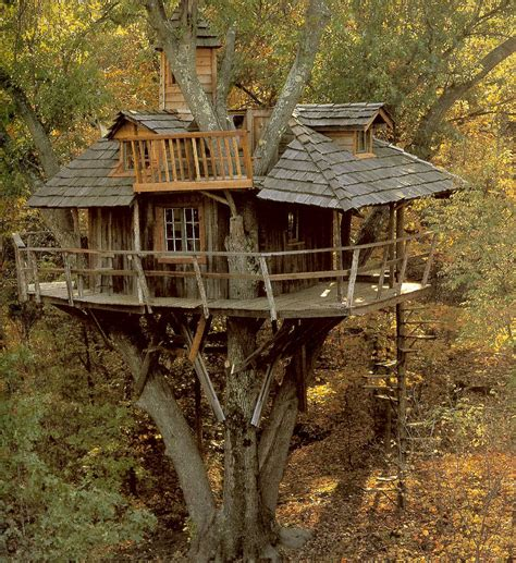 treehouse house bensozia tree houses