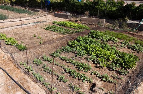 Vegetable Garden In Arizona Purplebirdblog Com Arizona Vegetable Garden