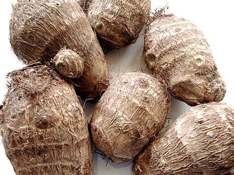 potato like root vegetable beech chiropractic ayurvedic health centers taro root