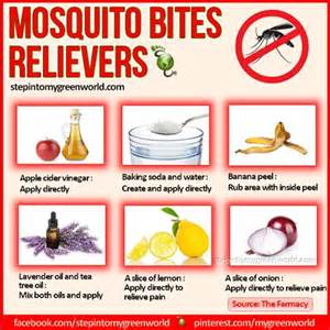 mosquito repellent home remedies mosquito bite remedies mosquito bite remedies