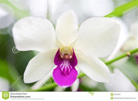 imagenes de orquideas verdes orqu 237 deas blancas y violetas fotograf 237 a de archivo libre