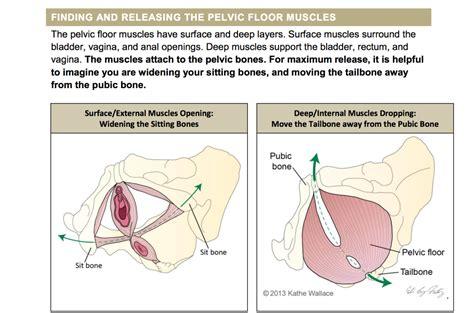 pevlic floor pt the pelvic health handout project pelvic guru