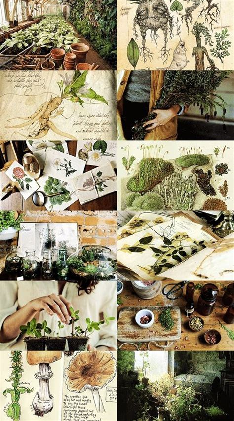 hogwarts subjects herbology herbology is the study of magical and mundane plants and fungi