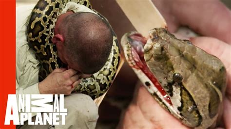 python latches  handlers face devoured youtube