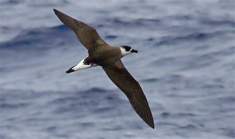 florida pelagic birding