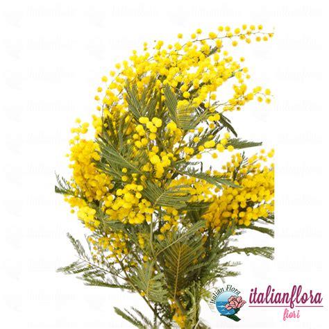 mazzo di fiori con mimose vendita mazzo di mimosa consegna a domicilio