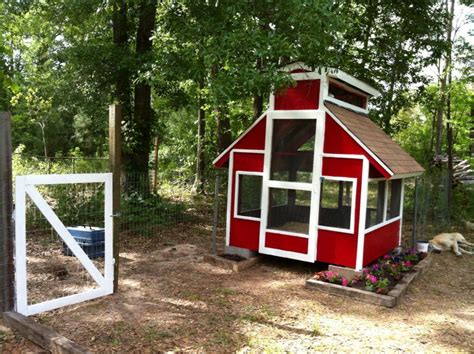 school of duck house backyard chickens community