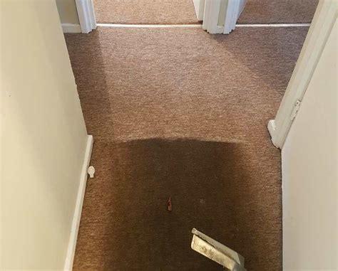 Upholstery Cleaning Hemel Hempstead Hp3 Extra 15 Off