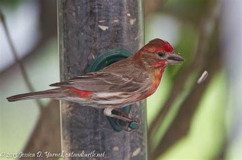 florida backyard birds central florida backyard bird identification