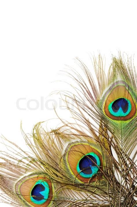 How To Use Home Design Gold Peacock Feather Background Stock Photo Colourbox