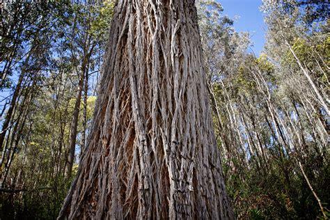 file bark nunniong jpg wikipedia