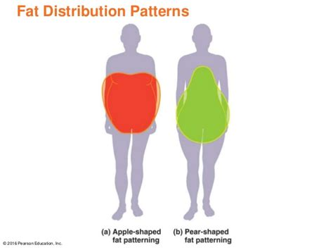 android pattern fat distribution chapter 9 power point