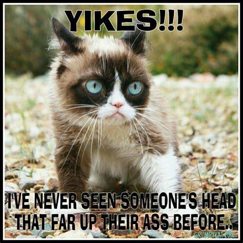 Original Grumpy Cat Meme - 68 best images about my grumpy cats 2014 n 2015 n 2016 n