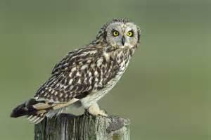 birds pictures owls galleries bird pictures
