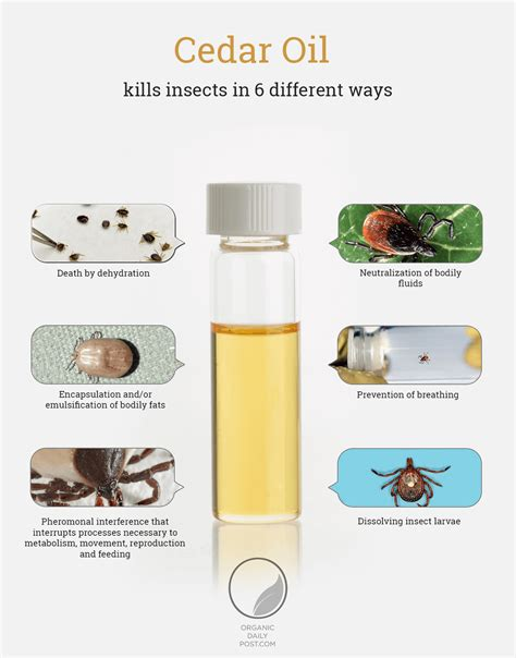 cedar oil bed bugs how to use cedar oil the natural bug repellent