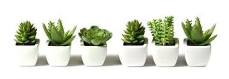 mini house plants sennik kwiaty w doniczce tłumaczenie snu na megasennik pl