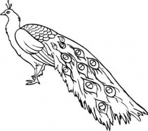 National Bird Of India Outline by Ausmalbilder Pfau Ausdrucken Malvorlagen Kostenlos Cliparts Free Bilder Kostenlos Clipart