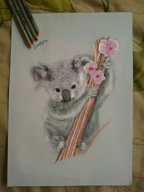 koala love drawing