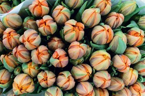 p i fruits new covent garden 89 best orange images on blossoms orange