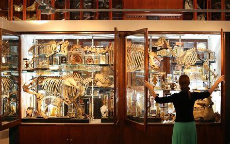 Papier Peint Cabinet De Curiosité by 50 Museums In Arty Classes Arty Classes
