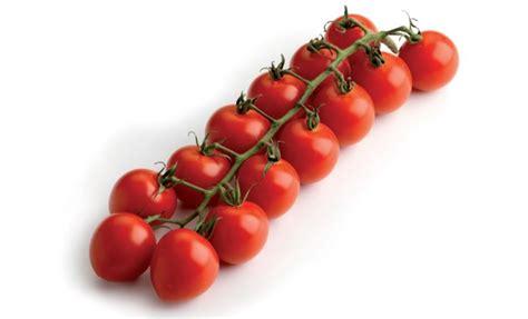 pomodoro ciliegino in vaso piante di pomodoro ciliegino medio carminio f1 in vaso 10