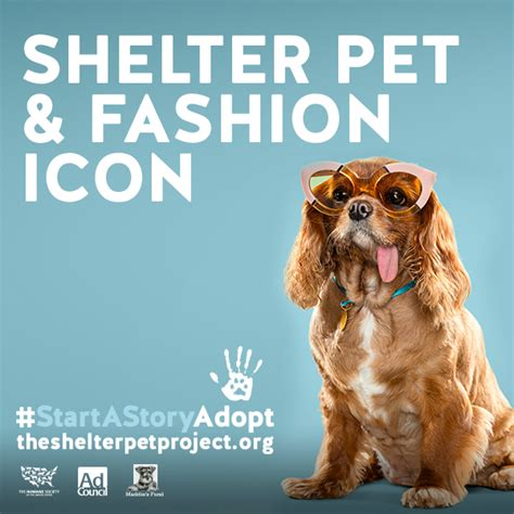 share shelter pet project  social animal sheltering