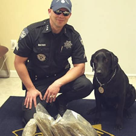 puppies fort lauderdale usk9 canine fort lauderdale dogs fort lauderdale academy