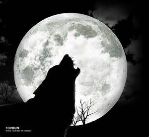 wolf howling at the moon wolf wolf howling and animal