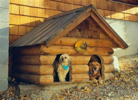 to be in the dog house 17 best ideas about cool dog houses on pinterest pet houses unique dog beds and dog