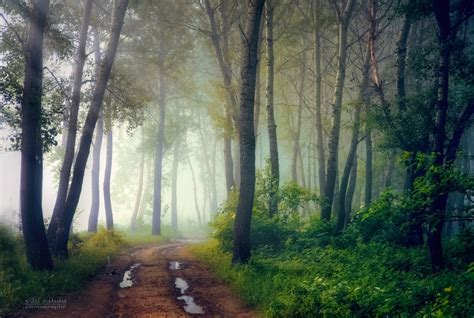 Mystical Forest II by valiunic on DeviantArt