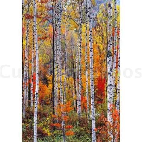imagenes otoñales vintage bosque alpino en oto 195 177 o cuadrosguapos com