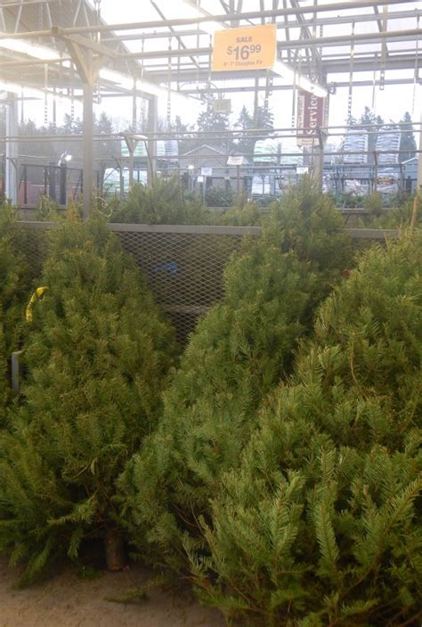 christmas trees fred meyer wish granted family s tree