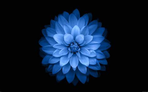 flower wallpaper macbook ac99 wallpaper apple blue lotus iphone6 plus ios8 flower