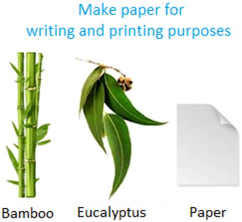 What Of Trees Are Used To Make Paper - uses of plants plants as food plants as medicines