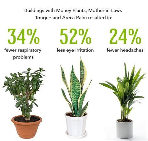 plants  clean  air  indoor plants indoor