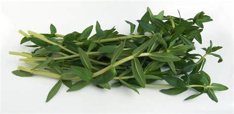 verse bladkruiden aziatische ingredientennl