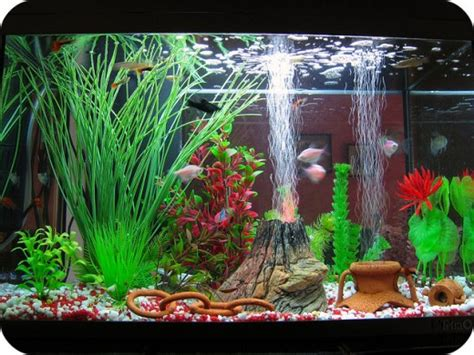 aquarium decorations choosing the best aquarium decorations for your fish