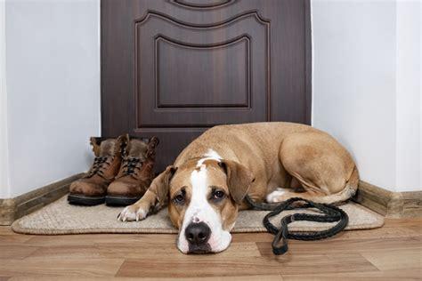 Best Doormat For Dogs by 5 Best Doormats For Dogs Indoor And Outdoor Of 2019