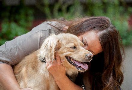 chicago adoption pet adoption paws chicago