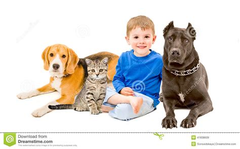 two dogs and a cat boy cat and two dogs stock photo image 41838609