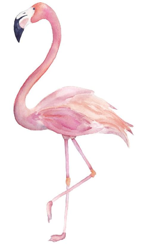 flamingo wall stickers wall sticker flamingo copy walldesign56 wall decals murals posters