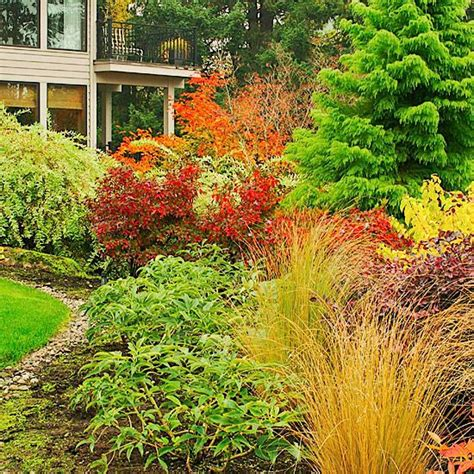 great front yard trees landscaping ideas for the front yard trees and shrubs