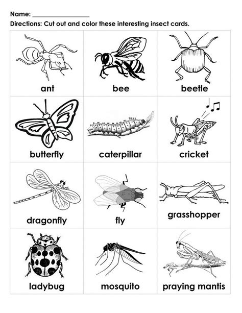 preschool coloring pages bugs bugs for kids to color interesting insects black