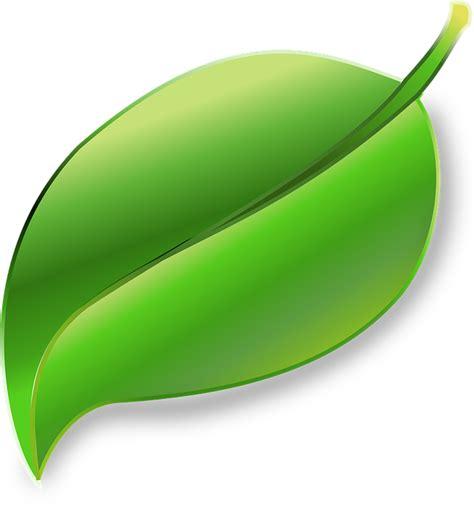 La Verne Vas Bunga Kuning gambar vektor gratis daun tanaman ekologi lingkungan