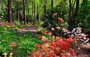Wedding Programs Online A Place To Rest Duke Gardens