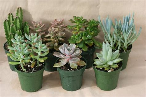 mini house plants succulents the perfect diy gift the gift exchange blog